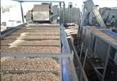 Mechanical drying of pistachios