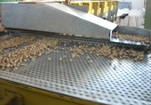 Mechanical sorting and grading of pistachios